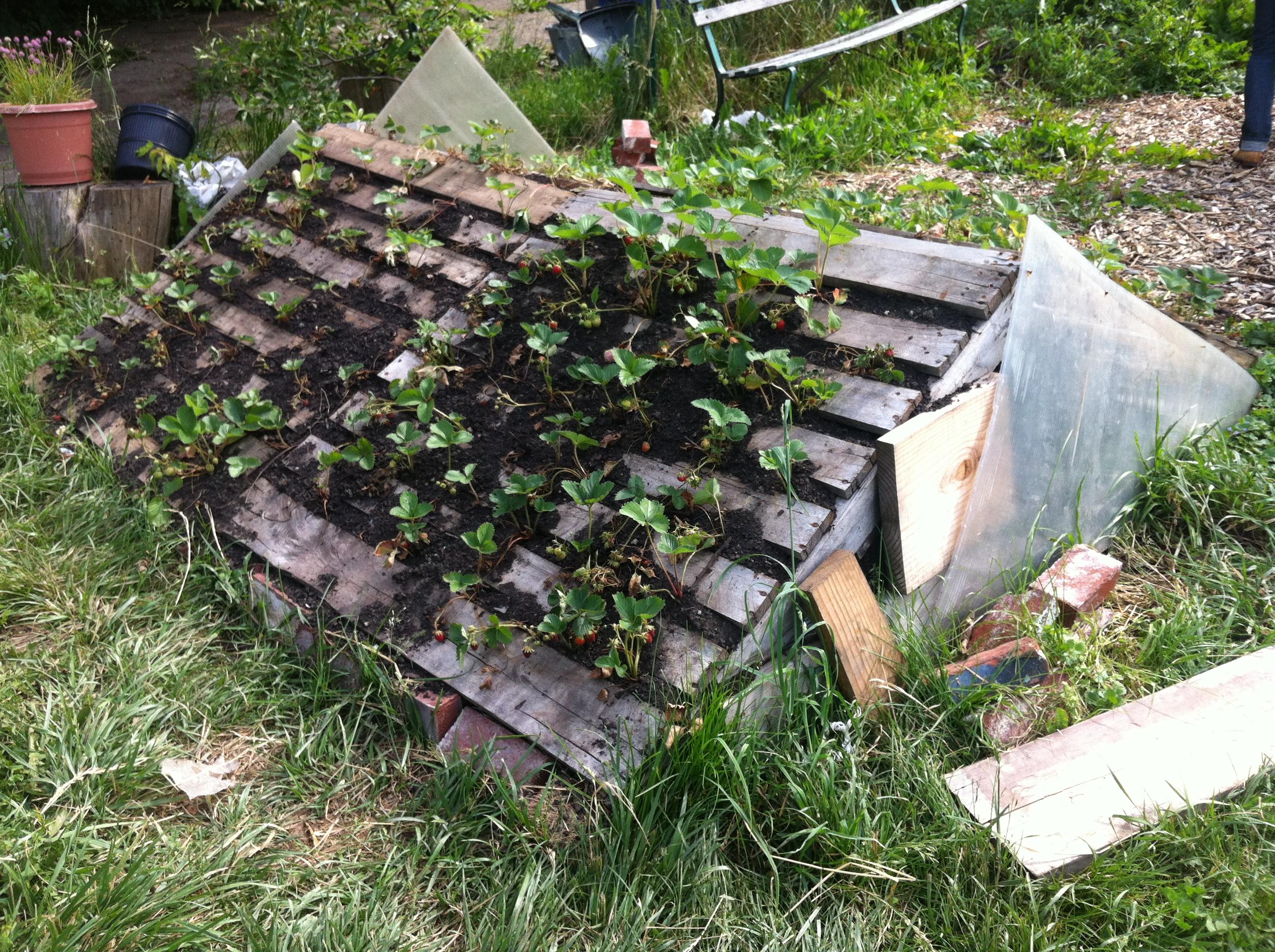 Detroit #11: Earthworks Farm, Capuchin Soupkitchen und das Urban ...